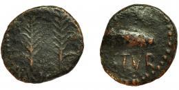 2062  -  HISPANIA ANTIGUA. OSTUR. Semis. A/ Dos palmas. R/ Bellota a der., debajo OSTVR. AE 4,8 G. 21 mm. I-1975. ACIP-2432. BC/BC+.
