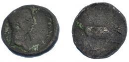 185  -  COLECCIÓN CORES. EBUSUS. CLAUDIO I. Semis. A/ Cabeza a der. R/ Toro a der. AE 7,36 g. 24 mm. RPC-482A. APRH-482A. ACIP-3185. CC-5166, mismo ejemplar*. BC-.
