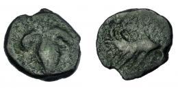 221  -  HISPANIA ANTIGUA. ACINIPO. As. A/ Racimo. R/ Una sola palma. AE 3,75 g. 19 mm. I-no. ACIP-no. BC. Muy rara.