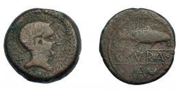 233  -  HISPANIA ANTIGUA. CAURA. As. A/ Cabeza con casco a der., detrás X, alrededor láurea. R/ Sábalo a der., debajo A y creciente, en medio entre líneas CAVRA. AE 18,72 g. 29,9 mm. I-765. ACIP-2407. BC+/BC. Muy rara.
