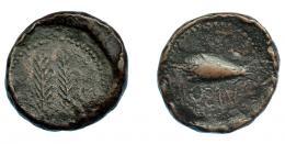 269  -  HISPANIA ANTIGUA. OSTUR.  ¿As? A/ Dos palmas. R/ Bellota a der., debajo OSTVR (con S retrógrada). AE 12,97 g. 26,3 mm. I-1976 vte. ACIP-2435. BC+. Rarísima.