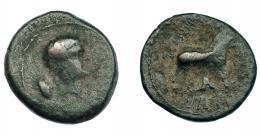 275  -  HISPANIA ANTIGUA. VESCI. As. A/ Cabeza masculina  a der., detrás espiga. R/ Toro a der., detrás árbol, debajo whsk. AE 10,10 g. 26,2 mm. I-2518. ACIP-962. BC+/BC. Rara.