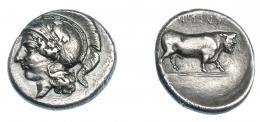 306  -  GRECIA ANTIGUA. CAMPANIA. Hyria. Didracma (400-335 a.C.). A/ Cabeza de Atenea a izq. con casco ático. R/ Toro a der.; YPINA (retrógrado). AR 6,24 g. 21,3 mm. COP-374. SBG-294. Pequeñas marcas. MBC+/MBC-. Ex col. Guadán 1308.