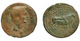 1129  -  HISPANIA ANTIGUA. CALAGURRIS. ¿Octaviano-Augusto? As. A/ Cabeza a der., delante NASSICA poco visible. R/ Toro parado a der; CALAGVRRI-IVLIA. AE 8,44 g. 28,2 mm. I-404. APRH-431. ACIP-1793. Pátina verde. RC/MBC-. Ex Áureo, 29-9-1998, lote 457.