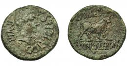 1280  -  HISPANIA ANTIGUA. CELSA. Octaviano (?). As. A/ Cabeza masculina a der.; COL V I CELSA-II VIR. R/ Toro a der.; L POMPE B(VCCO)/ L CORNE FRONT. AE 16,57 g. 30,3 mm. I-804. APRH-269. ACIP-1501. Rayas y pátina verde muy rugosa. BC+/MBC-.Ex Hervera, 3-12-1992.