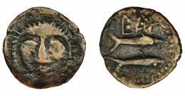 1049  -  HISPANIA ANTIGUA. ASIDO. Semis. A/ Cabeza frontal de Melkart con leonté. R/ Dos atunes a izq., debajo b´b´l. AE 3,66 g. 20 mm. I-156. ACIP-919. BC+/MBC-. Ex Áureo, 27-1-1999, lote 135.