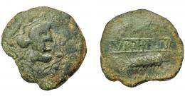 1817  -  HISPANIA ANTIGUA. TURRIREGINA. As. A/ Cabeza con casco a der., alrededor corona de hojas de hiedra. R/ Racimo (no visible) y espiga a izq., en medio entre líneas TVRRIREGINA. AE 16,58 g. 32,67 mm. I-2466. ACIP-960. Campos de rev. repasados. Cospel irregular. Pátina verde. BC+. Muy rara. Ex Áureo, 4-3-1998, lote 1503.