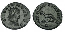 132  -  GALIENO. Antoniniano. Roma (267-268). R/ Pantera a izq.; LIBERO P CONS AVG, exergo B. RIC-230. MBC+/MBC.